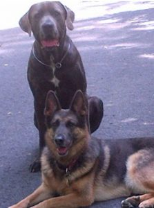 shelter pups.001