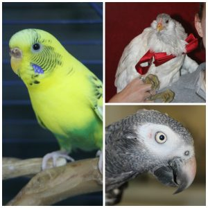 Bird Holiday Hazards Photo #3