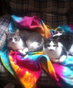Alison's Kitties