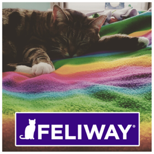 Feliway anxiety relief for cats