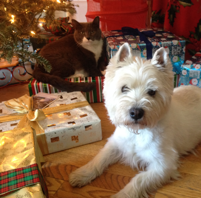 Holiday Hazards for Your Dog 2016