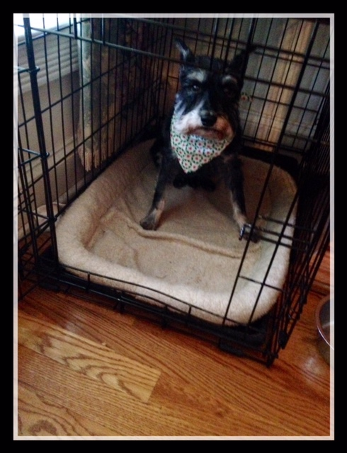 Crate Training – A Safe Haven For Your Dog