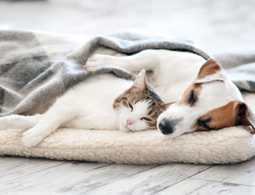 How Much Sleep Do Dogs and Cats Need daily?